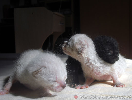 Kittens with eyes closed