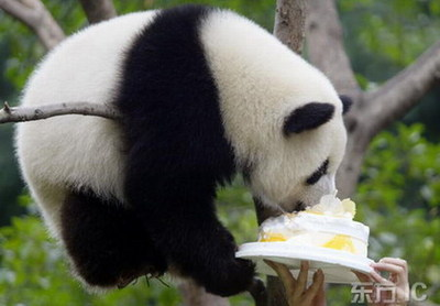 china-panda-birthday-01.jpg